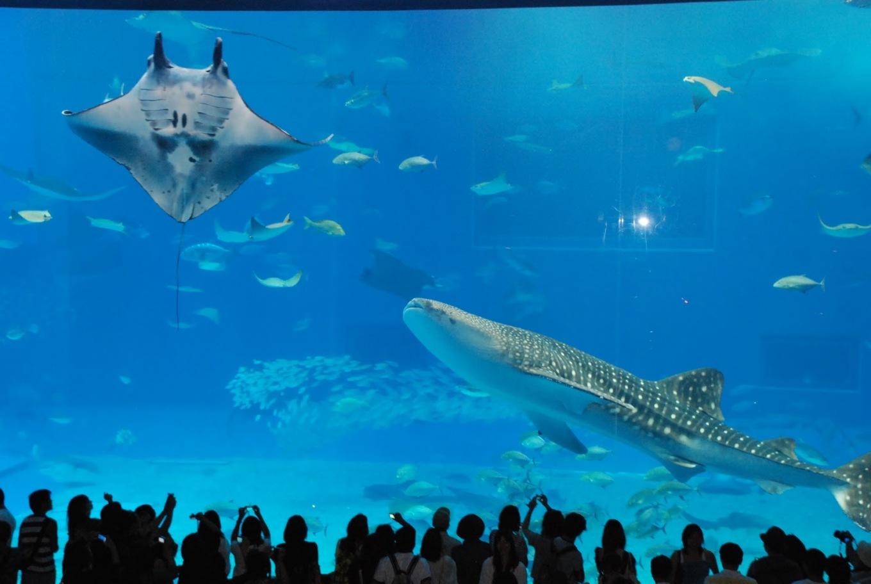 美麗海水族館.jpg